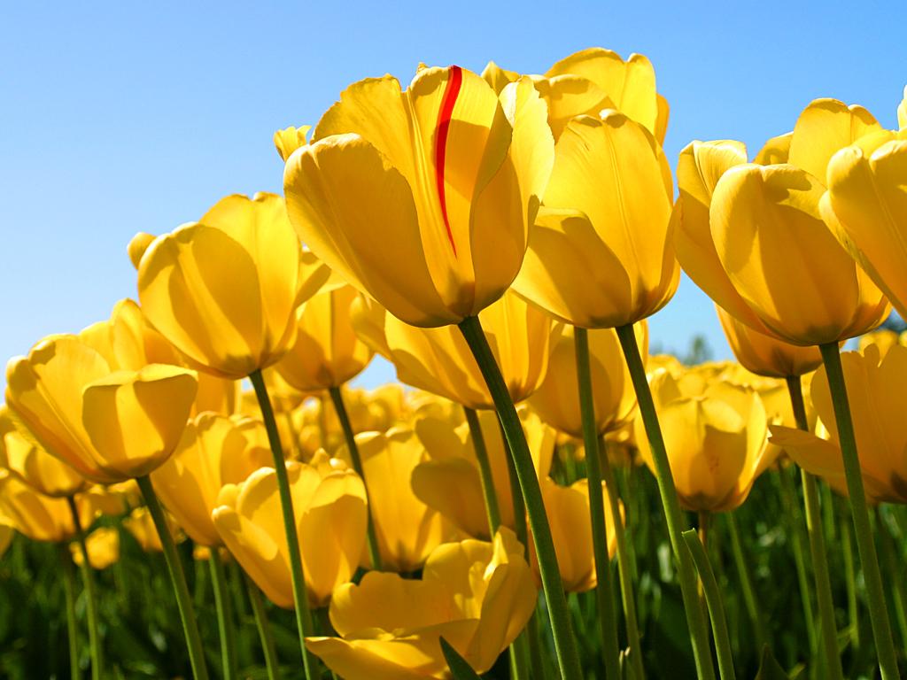 Totally Tulips Community Center