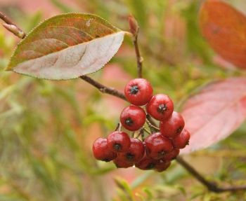 Soup 'n Walk: Nuts and Berries for Wildlife