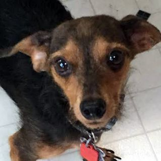 Rudy - ADOPTED