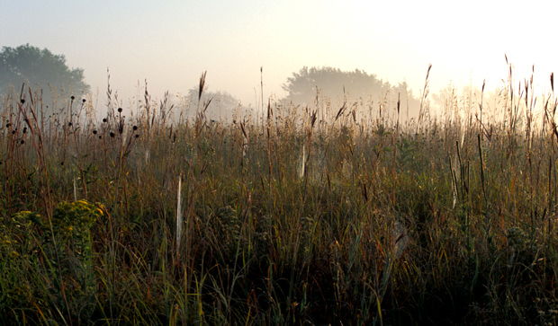Mist Over Morning Prairie