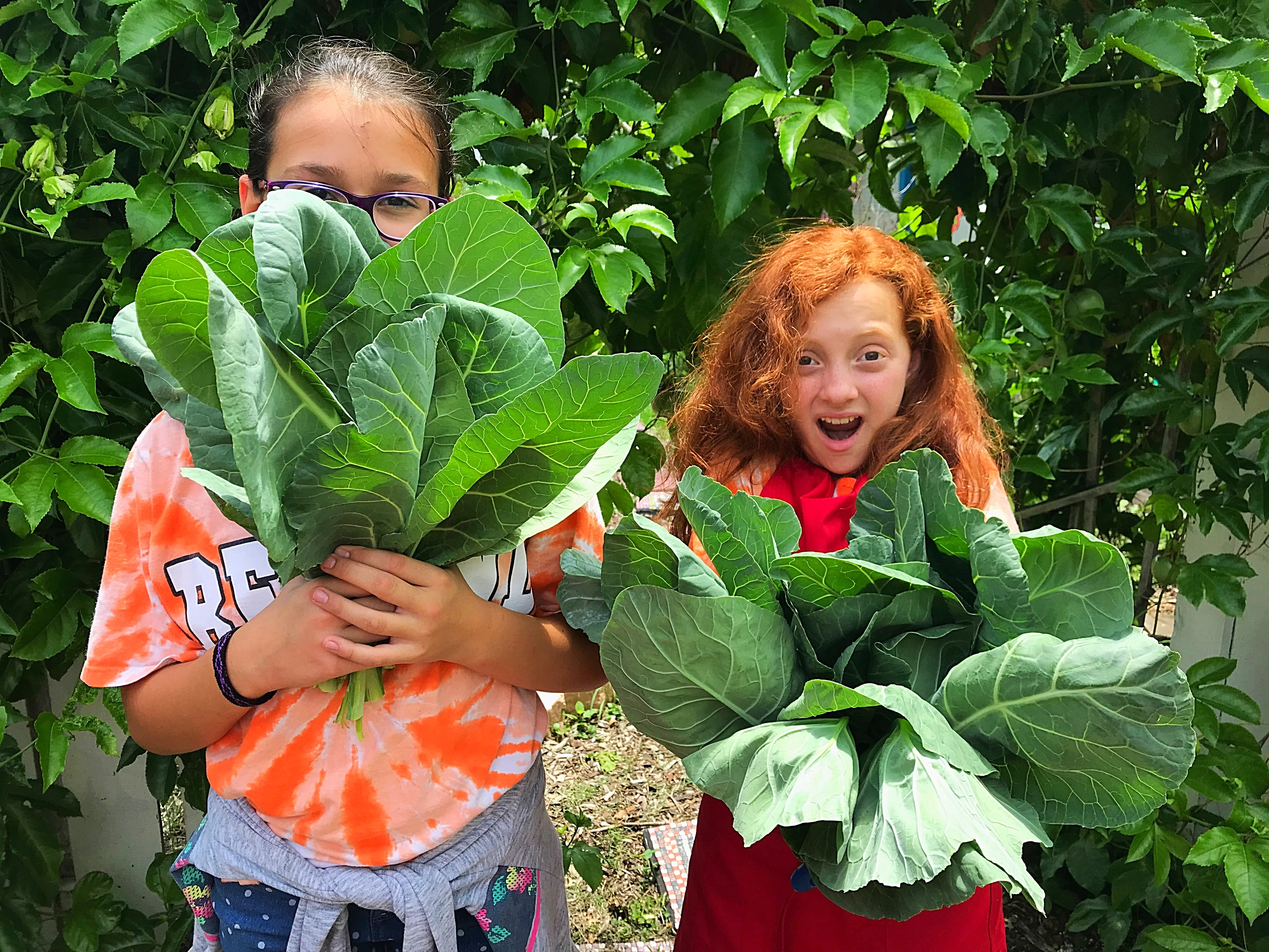 Students at Royal Palm Academy of Discovery harvest collards