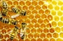 """""""Honey, I've Got The Bees"""" workshop"""