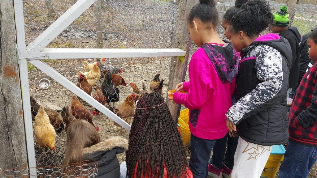 Mr. Dan's Chickens