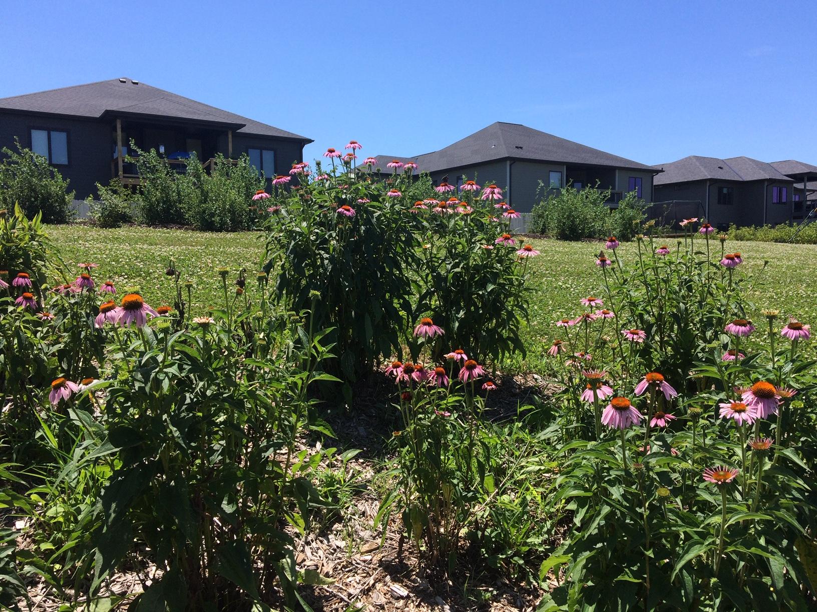 Nebraska Arboretum Honors Us with Visit!