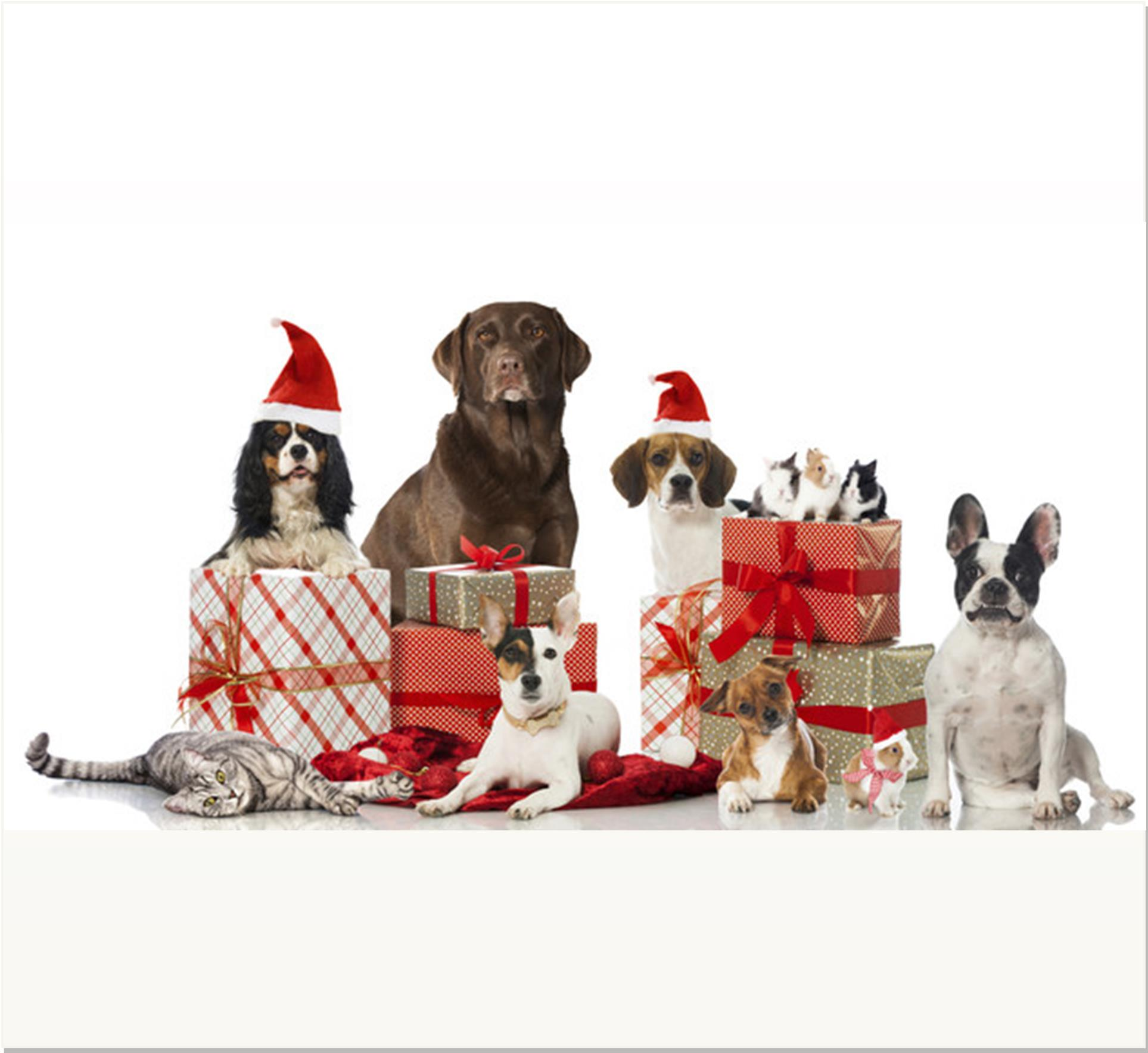 Gift Wrap Volunteers Needed!
