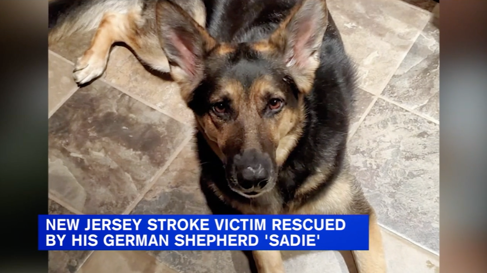 New Jersey man explains how newly rescued German shepherd helped save his life during stroke (ABC 7 New York)