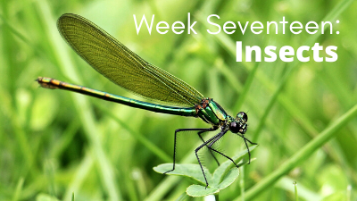 Week Sixteen: Insects