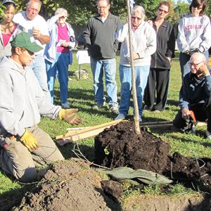 Irvingdale Neighborhood Tree Planting