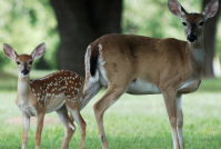 Wildlife Tax Valuation Seminar in January