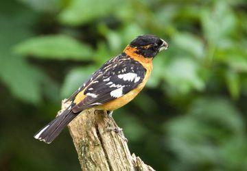 Bird Walks: Blue Sky Ecological Reserve