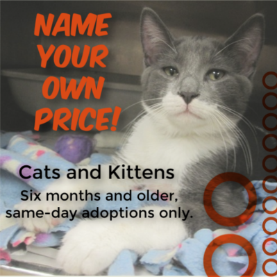 Tri,County Humane Society  Adopt  Adopt a Cat