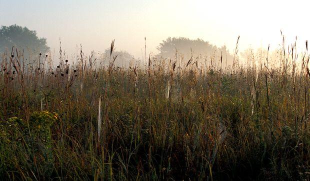 Mist Over Morning Prairie