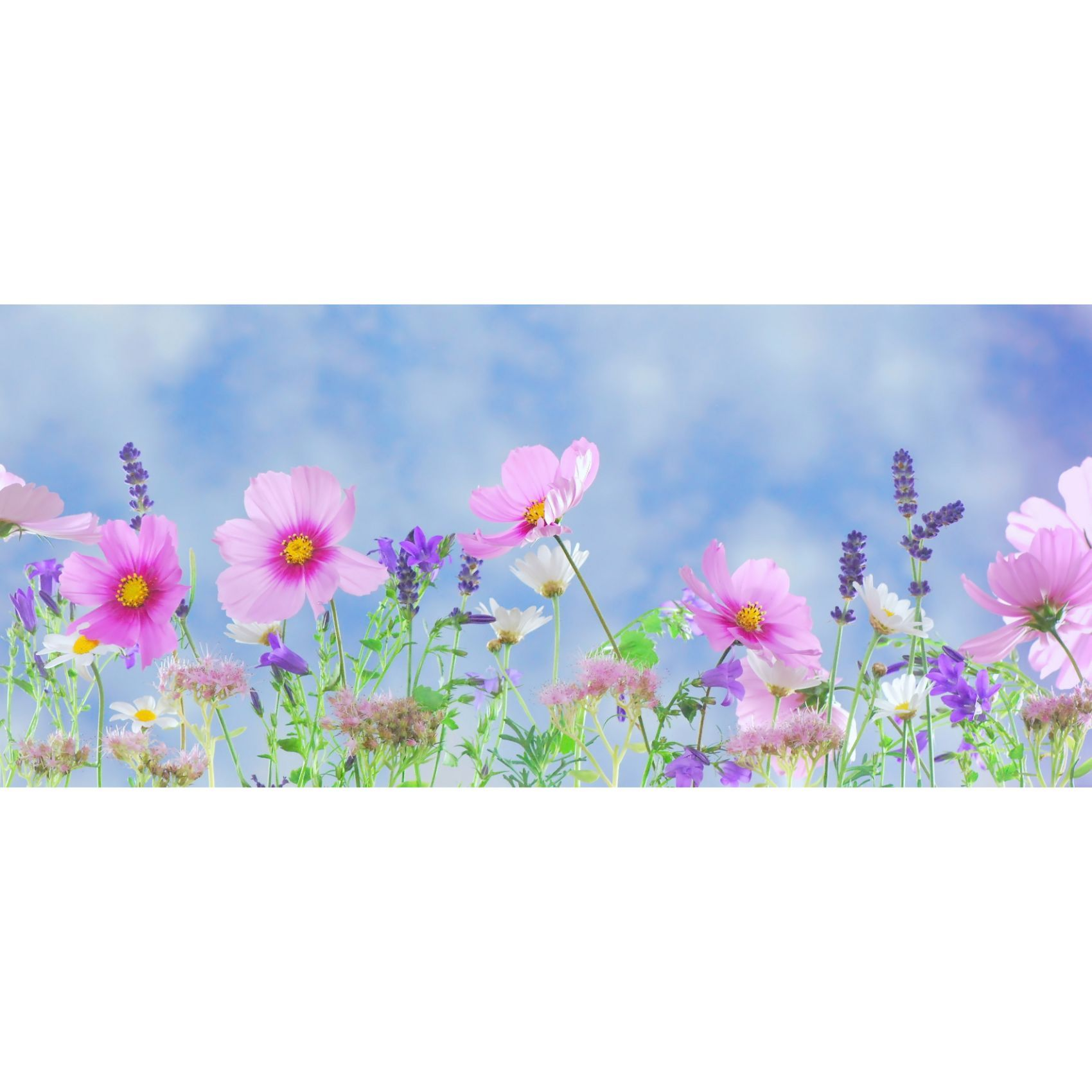 Discovering Mercy-Believing Matters-Field of Wildflowers