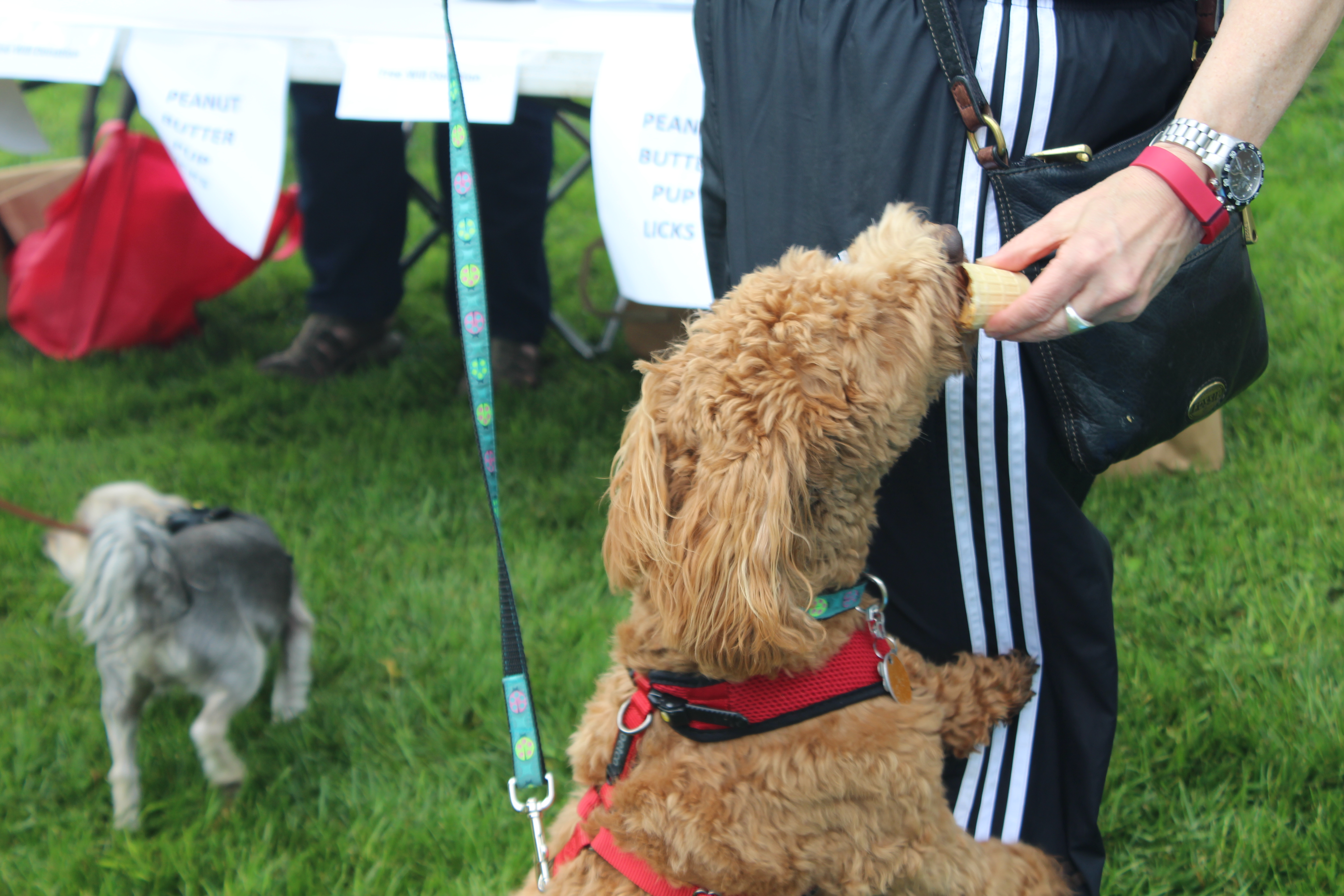 Wine and Howl 2015 Photo Gallery
