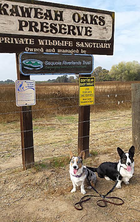 Dog Walk comes to Kaweah Oaks for Take It Outside, California