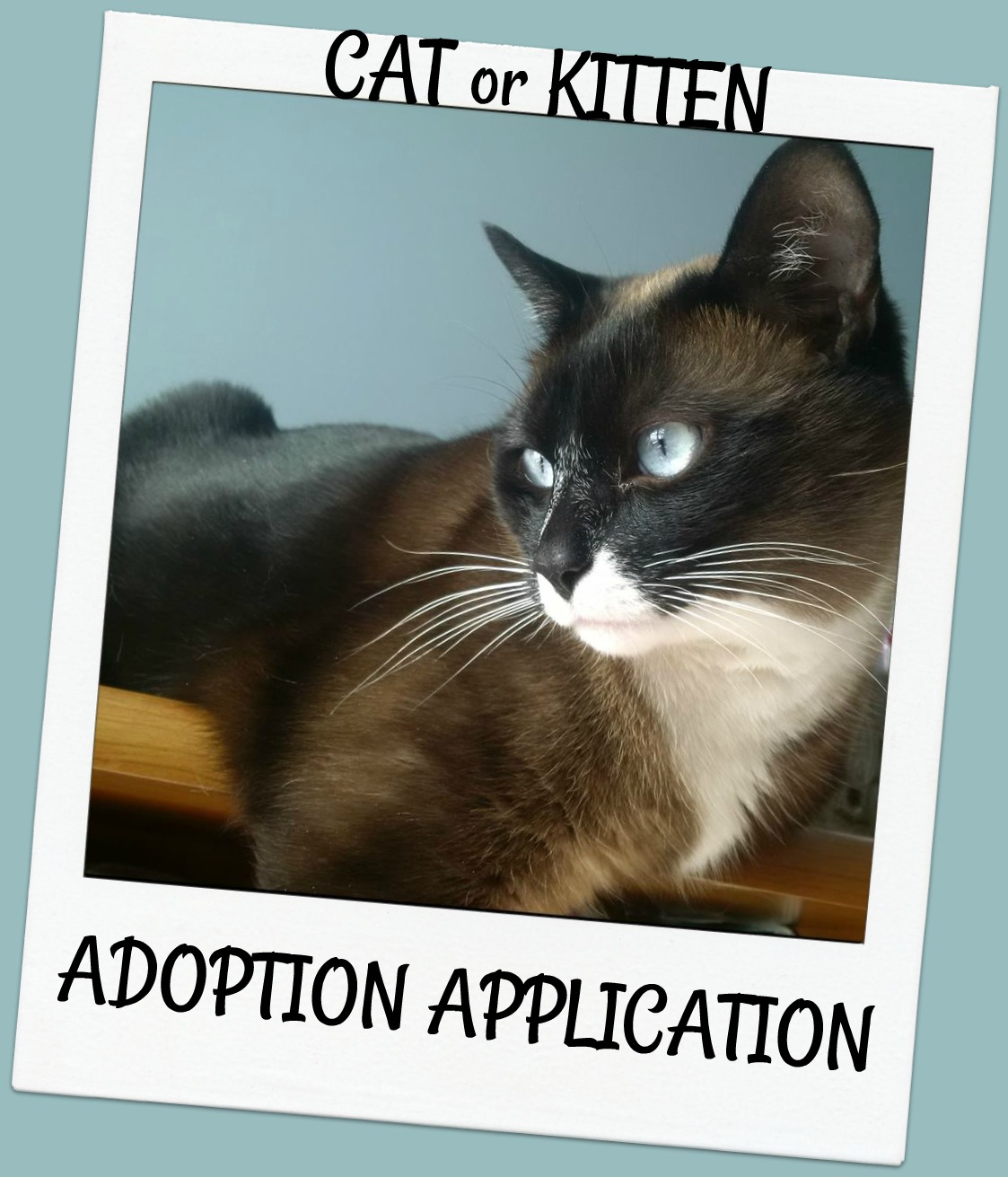 Click here to fill out a CAT ADOPTION FORM