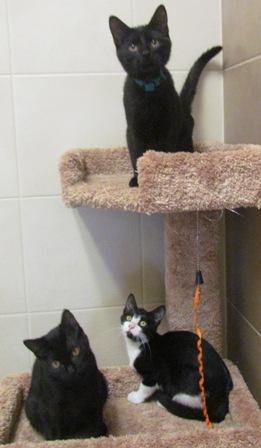 Kittens at NAMC!