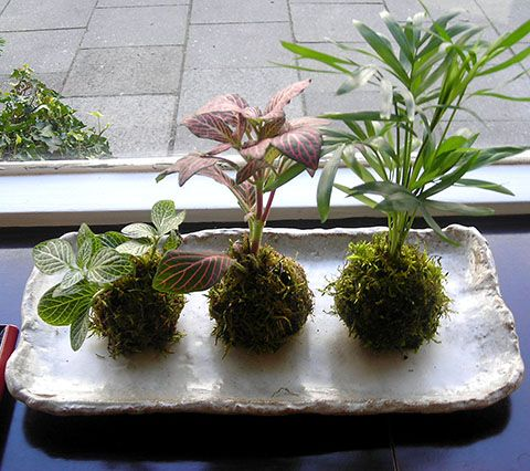 Kokedama - Planting in Moss-Covered Soil