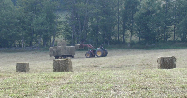 Organic Hay For Sale - Bovina Area