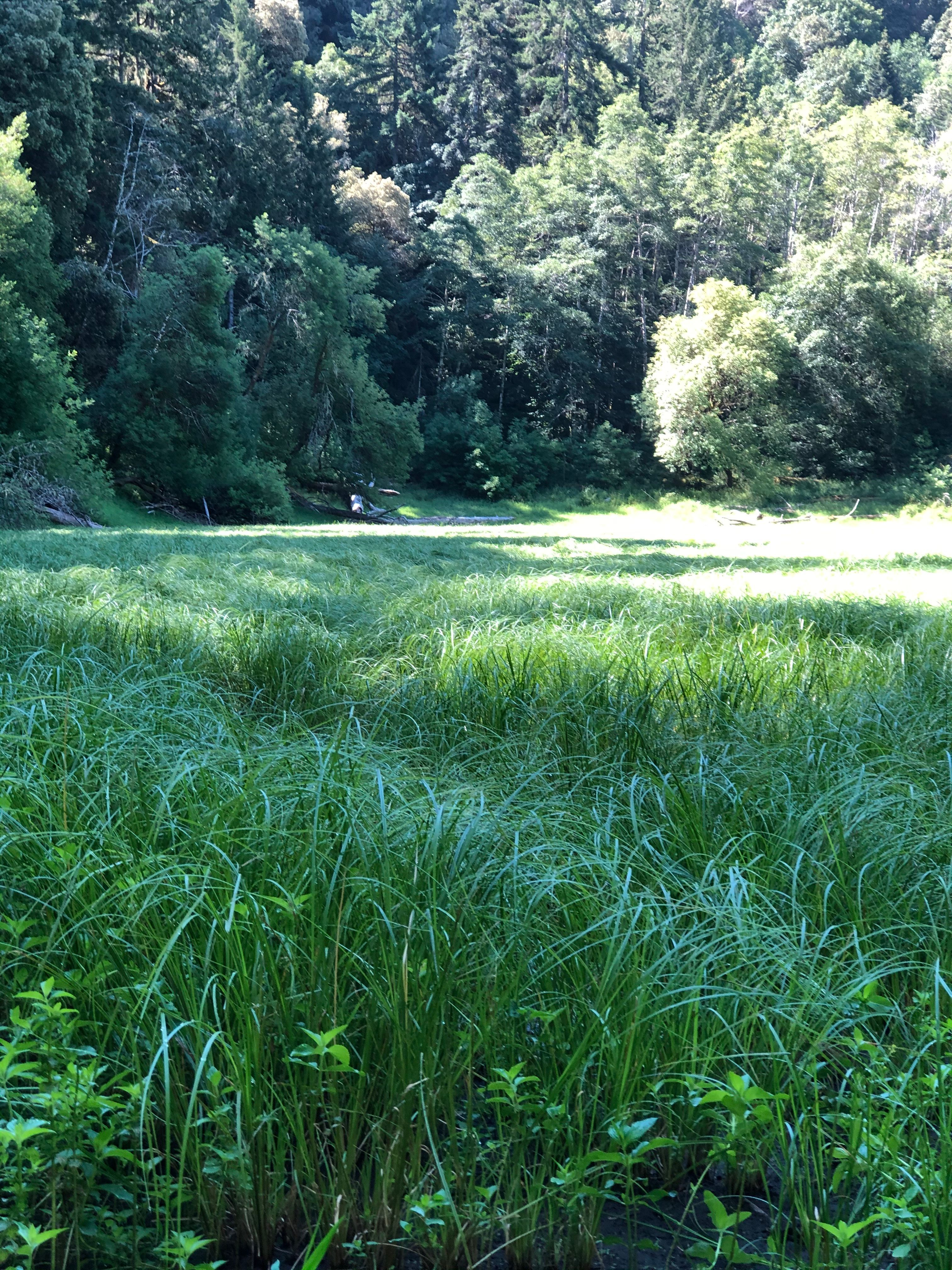 Raven Ridge - Wild Rivers Land Trust's Newest Conservation Easement