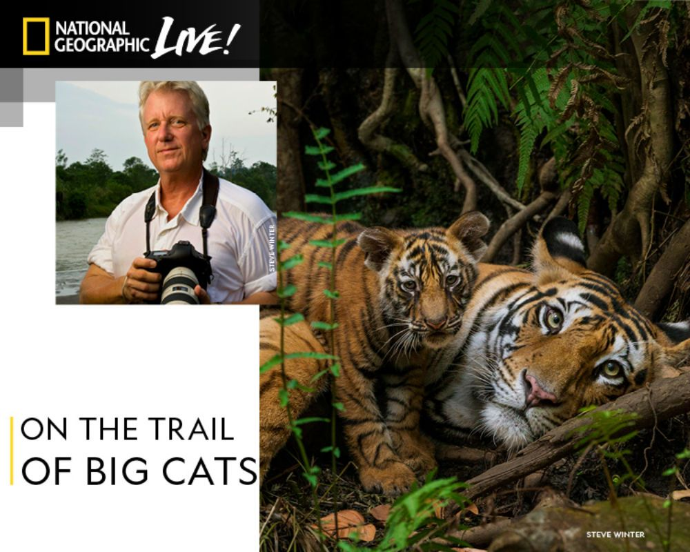 Steve Winter: On the Trail of Big Cats