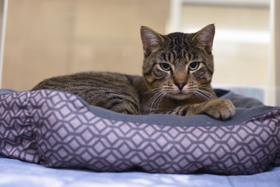 Lincoln Humane Society Cats For Adoption