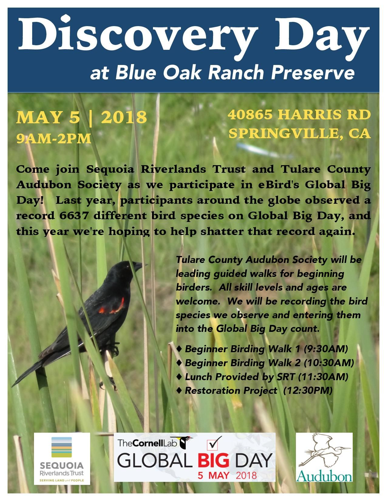 Birding at Blue Oak