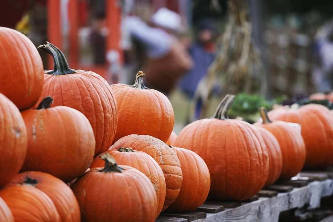 Fall Weekends at Snipes Farm!