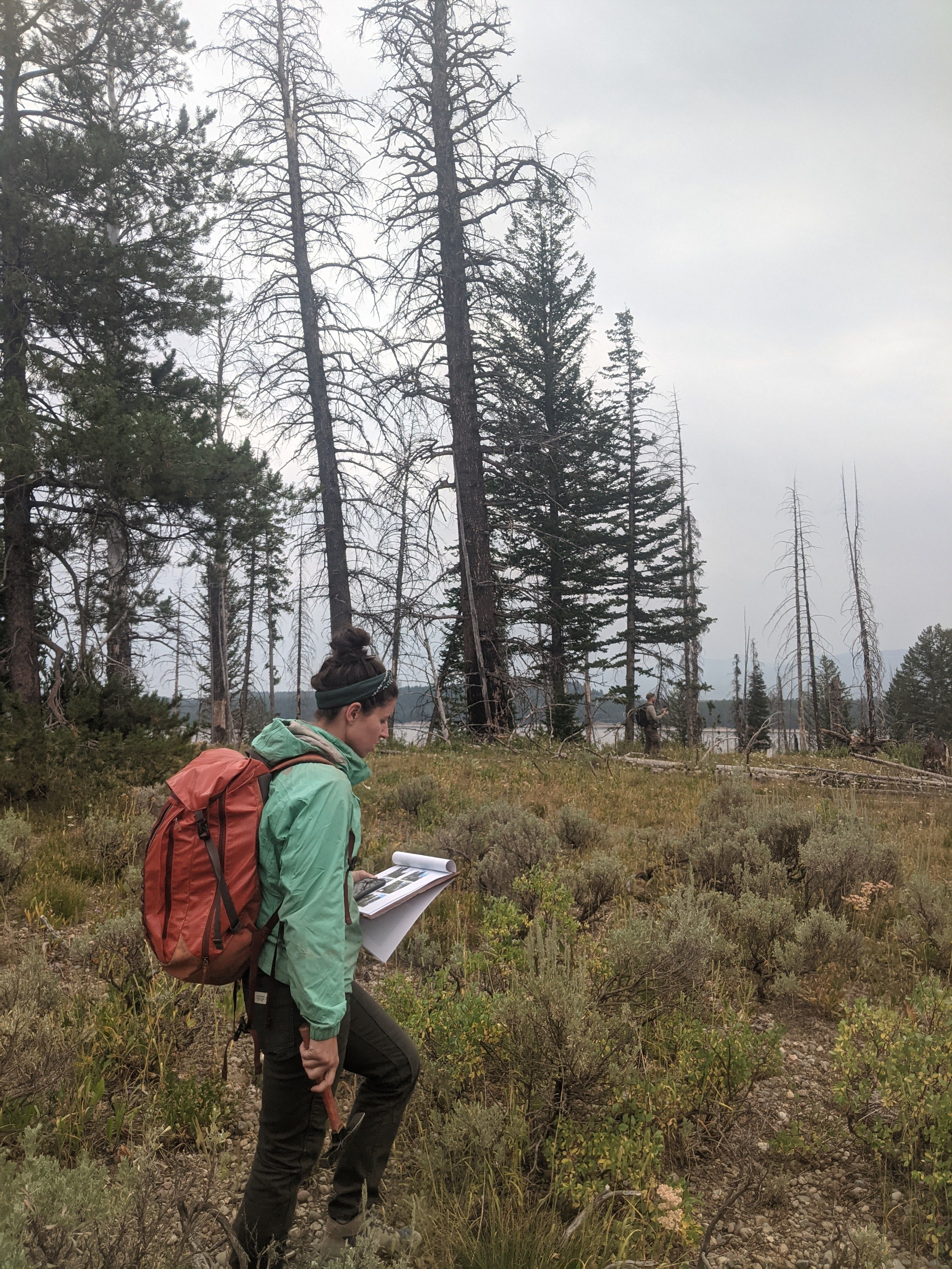 Fire Ecology at Grand Teton