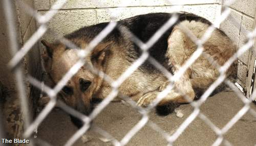 People far and wide hope to adopt 'Sarge,' dog shot 6 times in cage