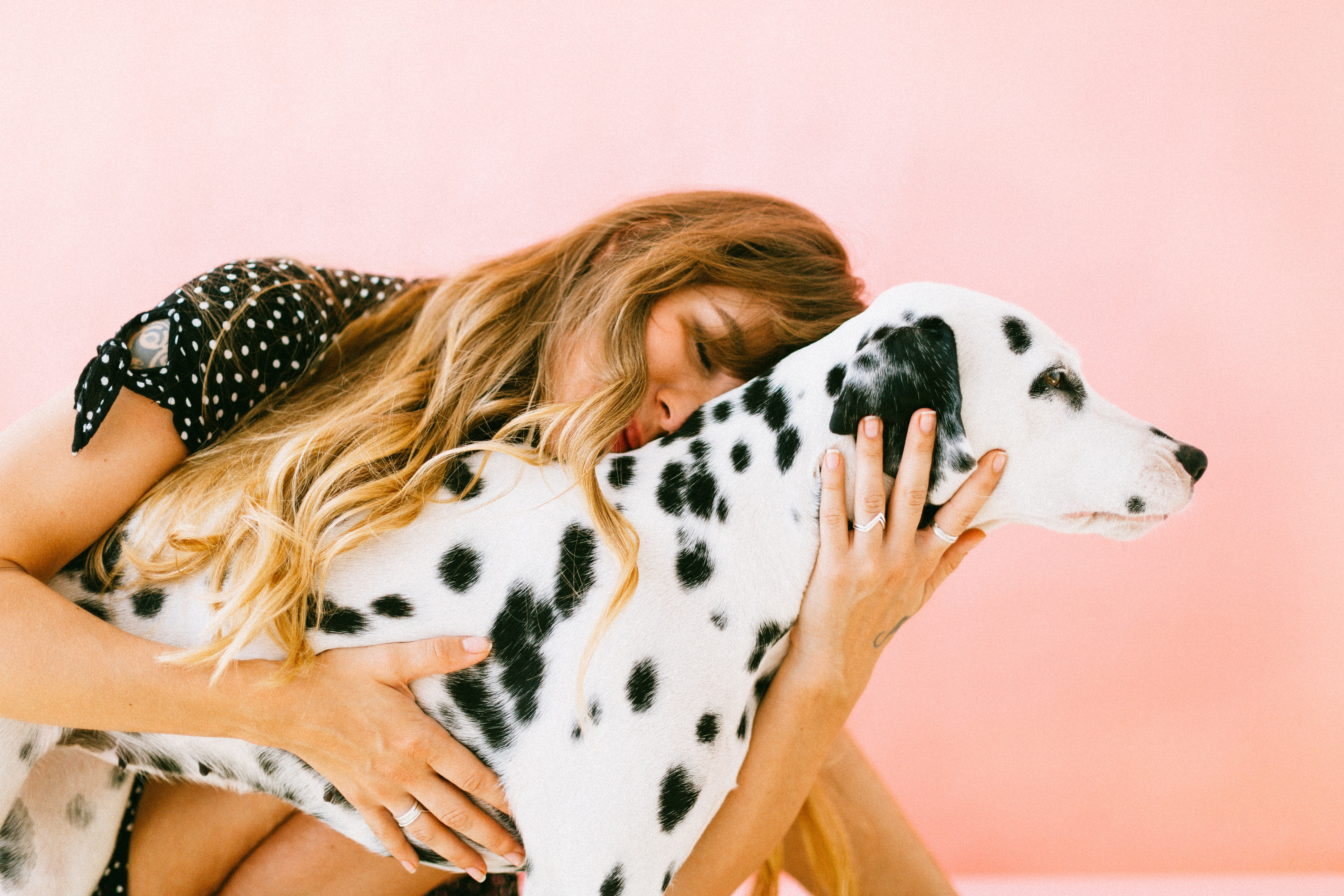 Finding Safety for Domestic Violence Survivors and their pets