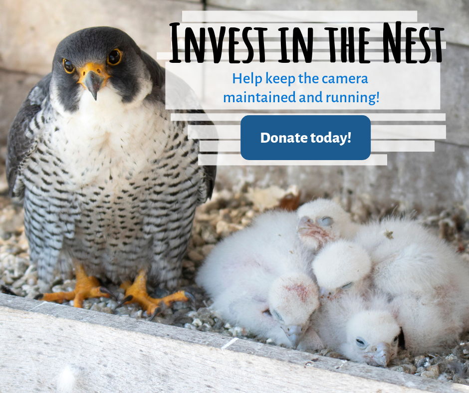 Invest in the nest