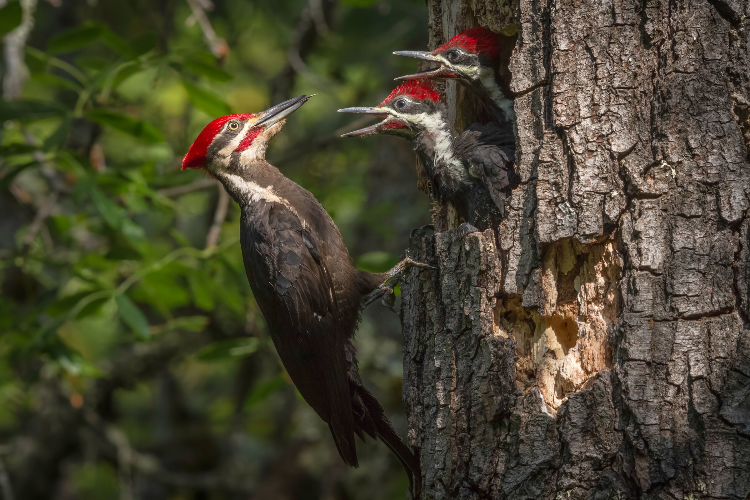 Upcoming Webinars: Birds of Georgia's Urban Forests (April 22) and What Lies Beneath: Soils, Roots and Urban Trees (May 20)