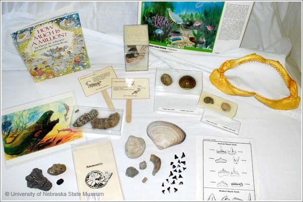 Ancient Sea Life
