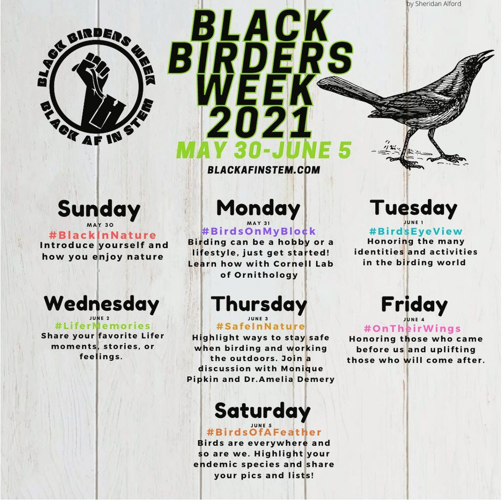 Black Birders Week: A Celebration of Birds and Nature in the BIPOC Community