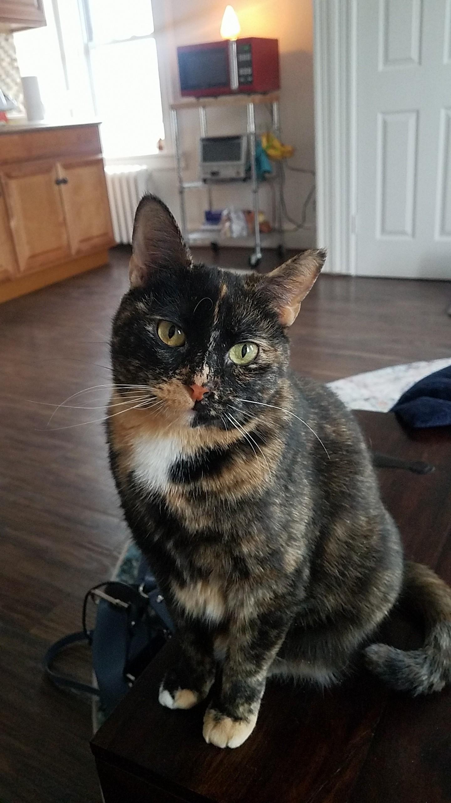 Stella (aka Nevada)