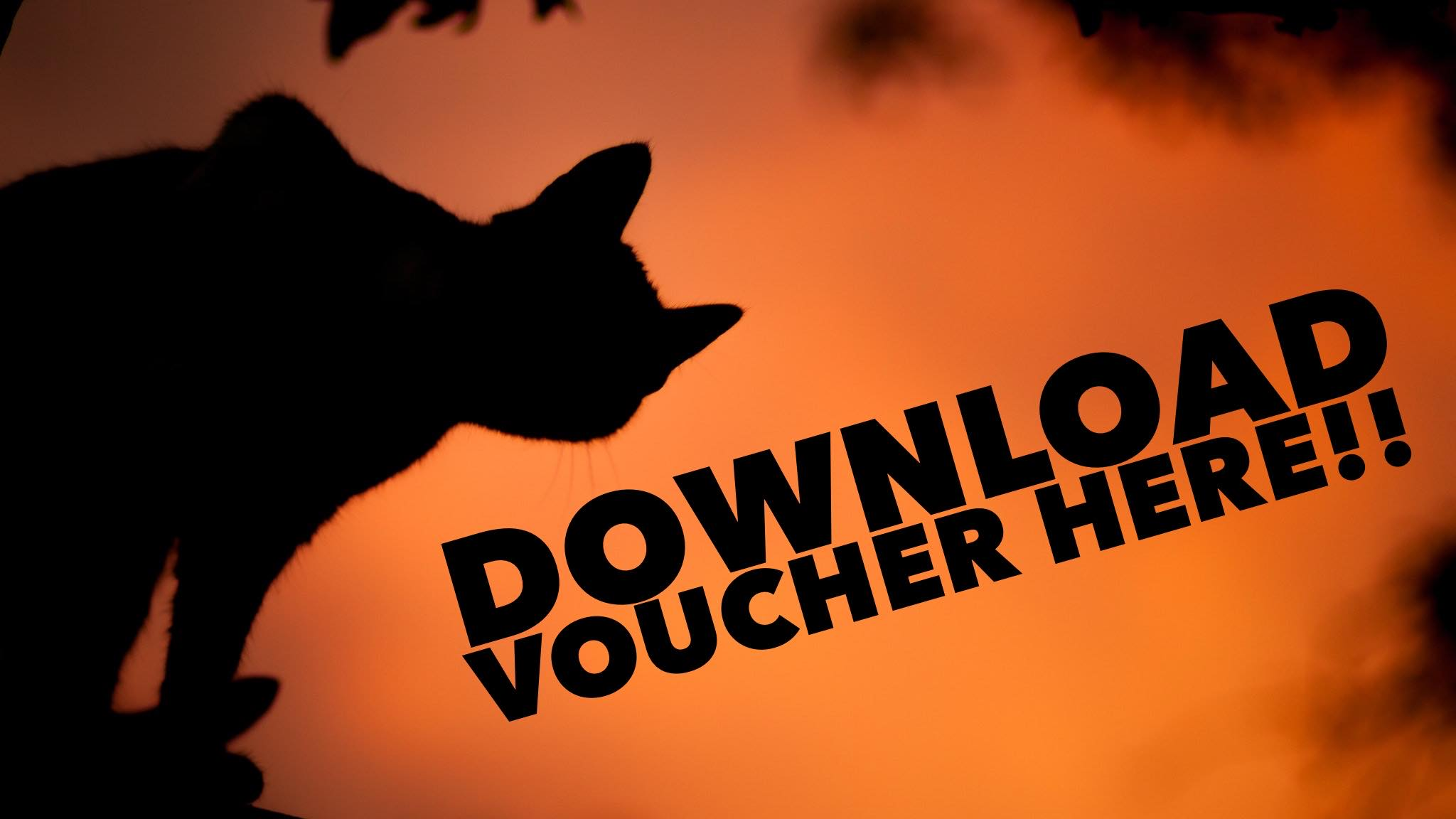 """Image of black cat silhouetted in orange light with black text that reads """"Download Vouchers Here"""""""