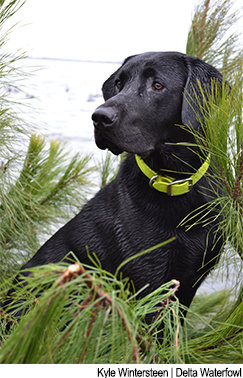 Training Checklist for an Adequate Duck Dog