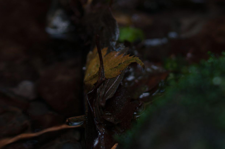 Rainbird 18, Alder Leaf