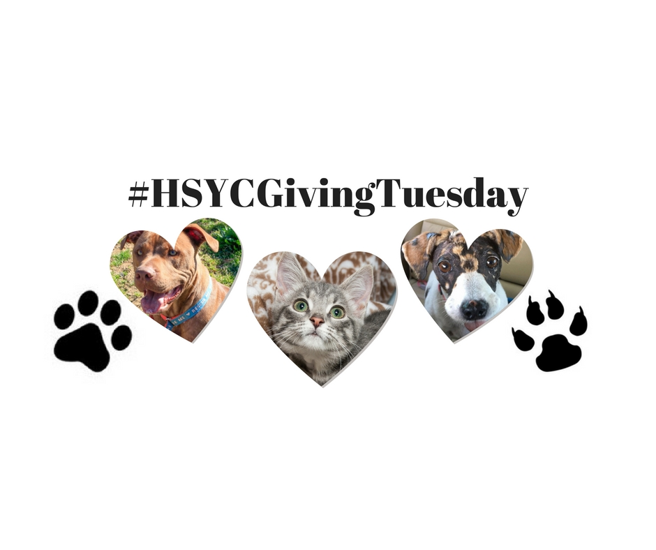 HSYC Giving Tuesday
