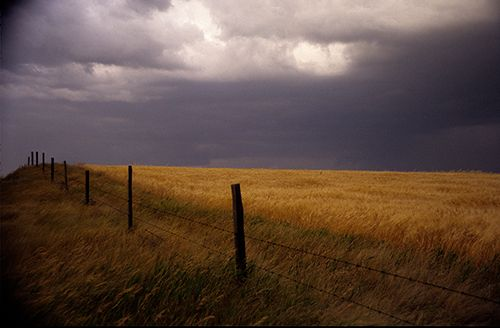 """Amber Waves of Grain, Photography, 20"""" x 30"""""""