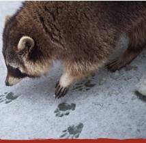 Poop & Paws: Investigate Nature's Clues