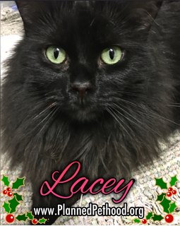 Lacey adopted 021018