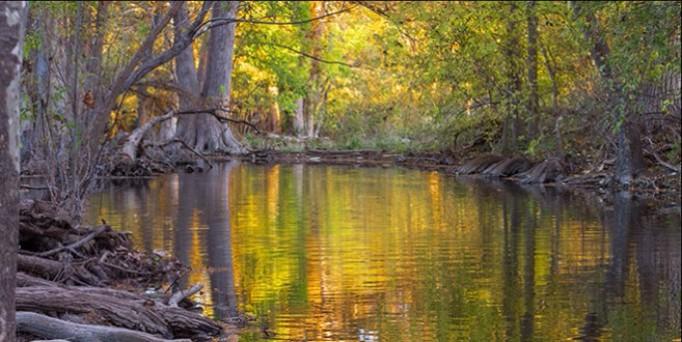 Magic light on the creek