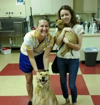 adopting family, adopting a new puppy