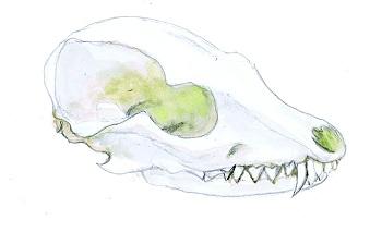 Talking Bones