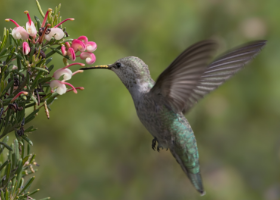 Songbirds and Hummingbirds