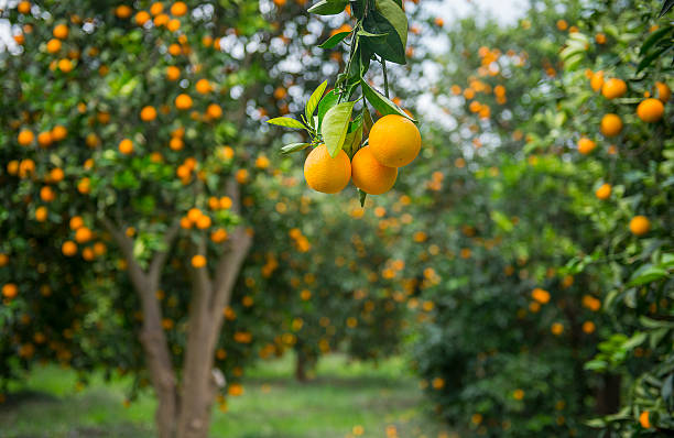 Plant Fruit Trees in January!