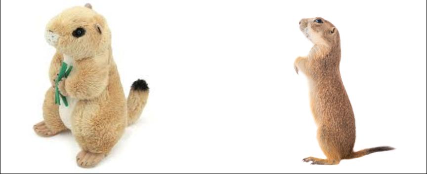 Prairie Dog - $150 Adoption Kit