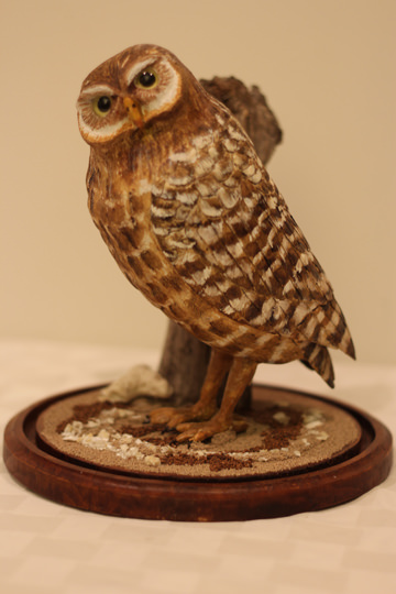 Burrowing Owl woodcarving - Donated by the artist, Dr. William M Black